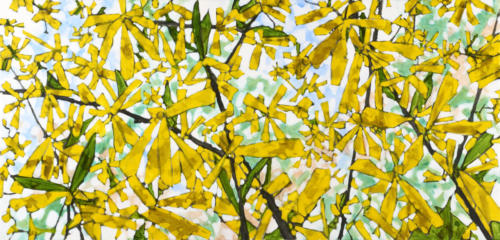 "Forsythia Study II 24x48"" SOLD"
